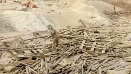 Mulher escapa com vida de enxurrada de lama no Peru