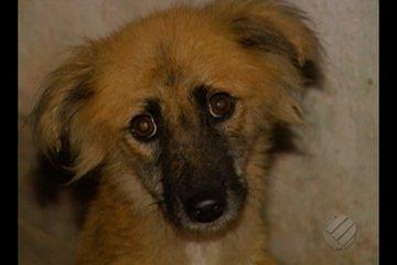 Abandonadas em casa de Belém, cachorra morre e outra passa fome