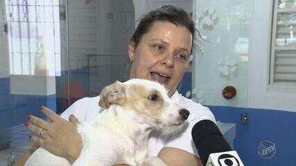 Abandono de animais em pet shops e clínicas veterinárias aumenta na região