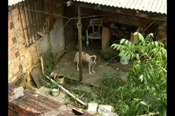 Cachorro abandonado no bairro da Cabanagem é ajudado por vizinhos