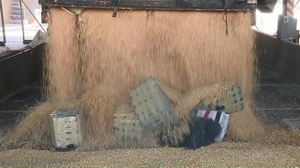 PF apreende mais de 2 toneladas de maconha que estavam em meio a carga de milho
