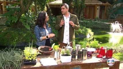 Aprenda a fazer uma horta de temperos