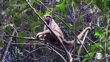 Morte de macaco bugio pela febre amarela provoca fechamento de dois parques em São Paulo