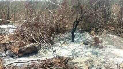 Operação integrada flagra 2.317 hectares de áreas desmatadas ilegalmente em AL