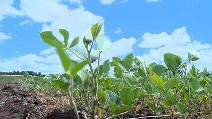 Falta de chuva prejudica plantações de milho e soja no Rio Grande do Sul
