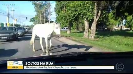 Animais soltos na Estrada de Sepetiba preocupam