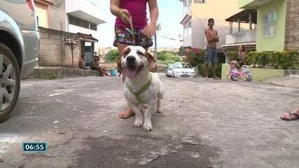 Mais de 30 cães e gatos são mortos envenenados em bairro de Cachoeiro de Itapemirim, ES