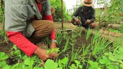 Hortas comunitárias espalham alimentos orgânicos em Teresina