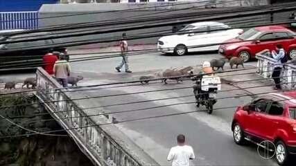 Flagrante também foi feito na Avenida Barão do Rio Branco em maio de 2018