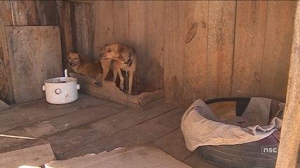 Canil opera em condições precárias na Serra de SC; cães morreram por contaminação