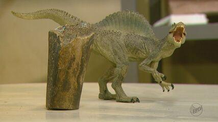 Pesquisadores da UFSCar encontram osso de dinossauro que viveu há mais de 110 milhões de anos