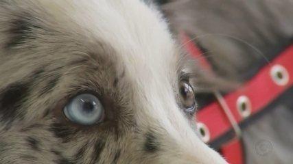 Animais com heterocromia chamam atenção no noroeste paulista