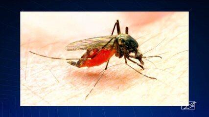 Maranhão registra mais de 600 casos de malária