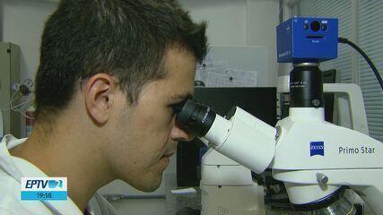 Pesquisadores da USP de São Carlos testam uma molécula capaz de curar a malária
