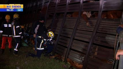 Carroceria de caminhão que transportava gado tomba e mata animais em Porto Alegre