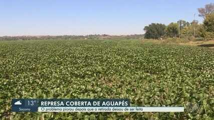 Represa Salto Grande enfrenta problema de aumento de aguapés em Americana
