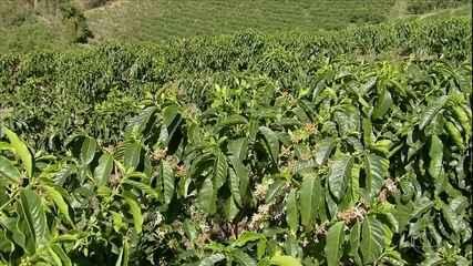 Insumos em alta preocupam cafeicultores de Minas Gerais