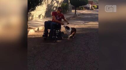 Cachorro é treinado para acompanhar cadeirante