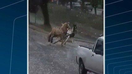 Cavalos assustados com chuva de granizo se soltam de charrete e invadem ruas de Petrópolis