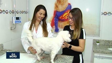 Exames podem prevenir câncer de mama em animais, dizem veterinários de Goiás