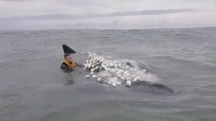 Surfista salva filhote de baleia preso em rede de pesca em SC