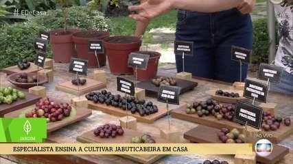 Especialista ensina a cultivar jabuticabeira em casa