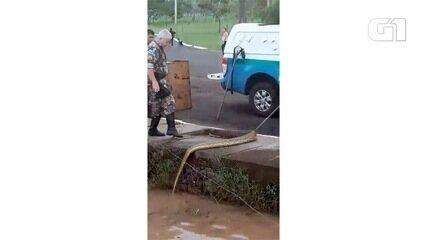 Sucuri de mais de 3 metros é retirada de lago no Parque das Nações Indígenas em MS