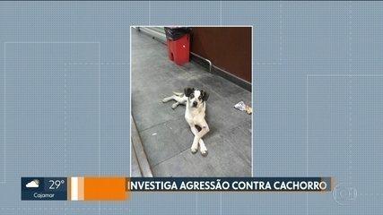 Polícia intima segurança de supermercado acusado de agredir cachorro em Osasco