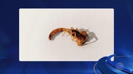 Passageira de ônibus urbano é picada por escorpião em Sorocaba