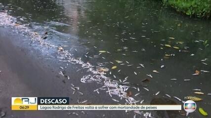 Lagoa Rodrigo de Freitas volta a sofrer com mortandade de peixes