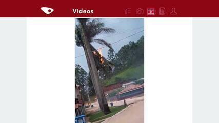 Coqueiro pega fogo depois de transformador entrar em curto por causa do vento