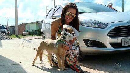 Cadela que teve boca queimada por rojão passa bem após cirurgia em Rio Grande