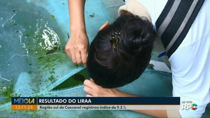 Região sul de Cascavel registrou índice de 9,3% de infestação do Aedes aegypti