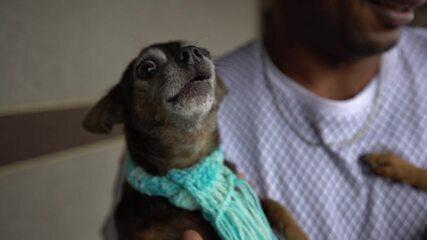 Esses cães capixabas são sucesso garantido na internet!