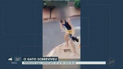 Gêmeas são suspeitas de maus-tratos ao arremessar gato do outro lado da rua em Ipuã, SP