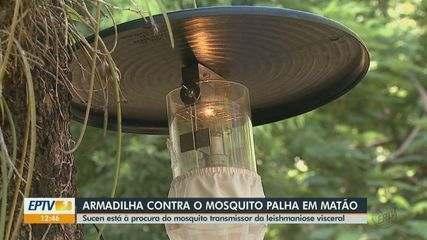 Armadilhas contra mosquito palha são instaladas em Matão