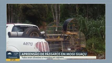 Pássaros são apreendidos em Mogi Guaçu
