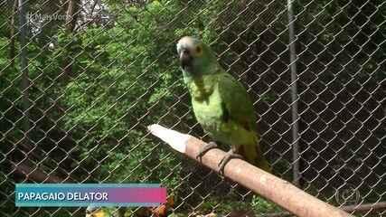 Papagaio apreendido em casa de traficante deve ganhar a liberdade no Piauí
