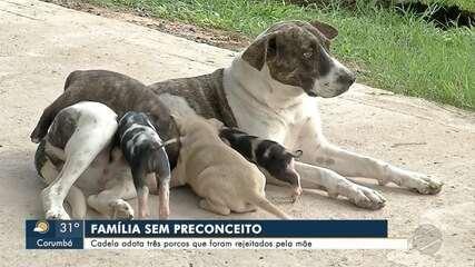Cadela adota três leitões que foram rejeitados pelas mães