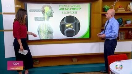 Neurologista explica como os ativos da maconha agem no corpo