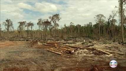 Desmatamento na Amazônia aumenta 60%, em junho deste ano em relação a 2018