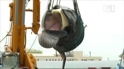 Japão retoma a caça comercial de baleias após 30 anos de proibição