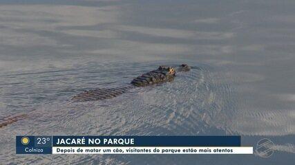 Jacaré mata cão em parque de Cuiabá