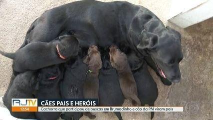 Cachorra que participou de buscas em Brumadinho (MG) e cão da PM são pais