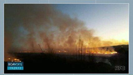 Área de reflorestamento de pinus pega fogo em Jaguariaíva