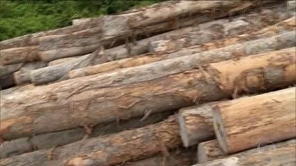 Governo da Alemanha vai suspender doações para Amazônia.