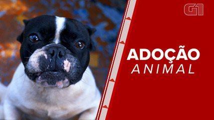 ONG de proteção animal comenta dificuldades na adoção de cães e gatos abandonados
