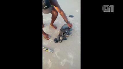 Tartaruga é encontrada presa a manchas escuras no litoral norte potiguar