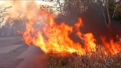 Cerrado tem mais queimadas do que a Amazônia no início de setembro