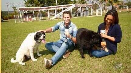 BLOCO 1: Colecionando / Cães Voluntários